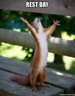 rest-day-squirrel
